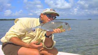 Full Grown Cowfish Fishing in Biscayne Bay Florida - Unusual Fish