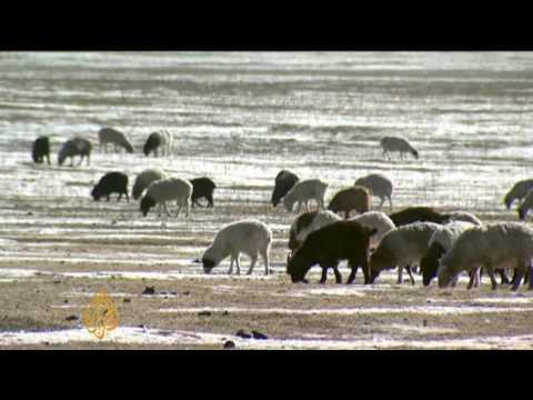 Mongolia's big freeze