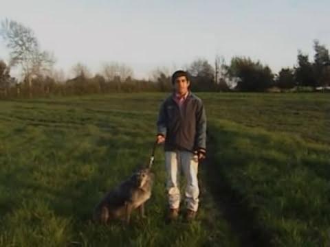 caza de liebres con galgos parral-chile 4