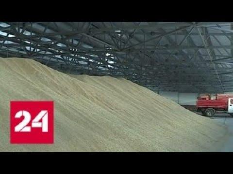 Излишки зерна пристроили: пшеницу в Новосибирской области закупит крупный трейдер - Россия 24