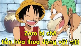 Luffy chê Zoro tiến hóa thua động vật =)) Thánh phương hướng Zoro :))