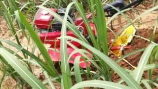 Sugarcane video Demo