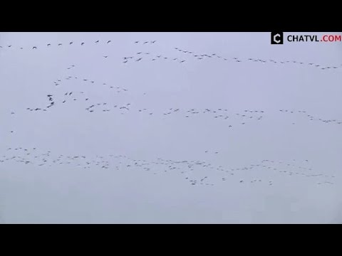 Những cảnh tuyệt đẹp tạo nên từ đàn chim