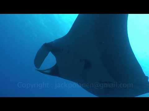 manta-rays-at-bat-islands-costa-rica-watch-in-hd-if-possible.html
