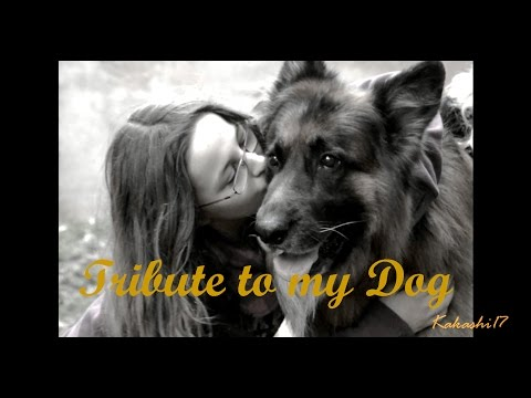 download lagu Tribute To My Dog 2 ~ Look After You gratis