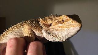 He's A Real Dragon!