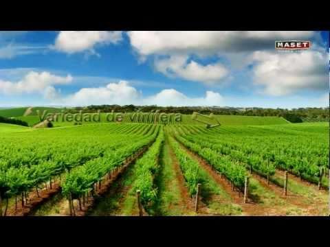 9 - Factores fundamentales en la calidad del vino