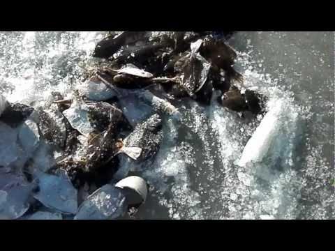 владивосток рыбалка на песчаном