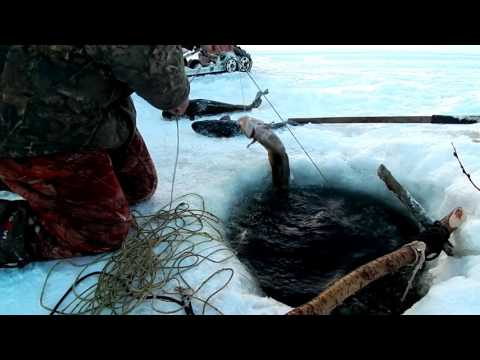 клевая рыбалка налим