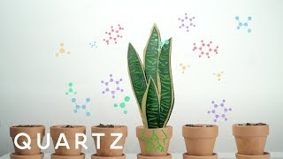 A NASA study explains how to purify air with house plants