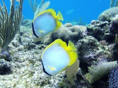 Treasures of Roatan - Snorkeling and Freediving on the Reef