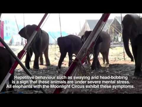 PETA India's 2013 Inspection of Animals in Circuses in India
