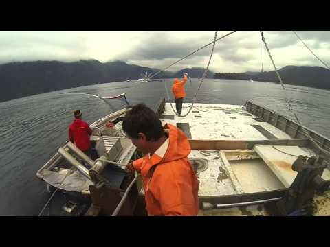 Seining Prince William Sound Alaska 2014
