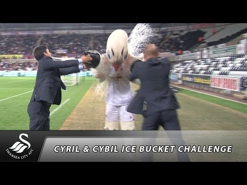 Cyril & Cybil the Swan do the Ice Bucket Challenge