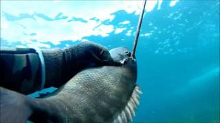 Spearfishing Windang Is. Part 1