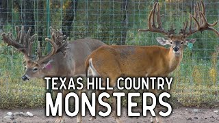 Texas Hill Country Monster Bucks at Droptine Ranch Breeders