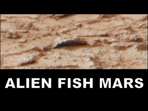 Mars Alien Fish & Jellyfish Fossils Found on Mars: NASA Curiosity Rover. ArtAlienTV - MARS ZOO 1080p