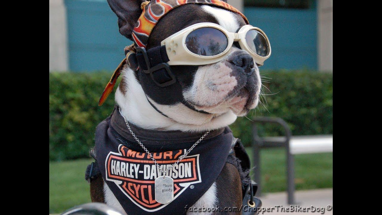 Watch Dogs Cool Helmet