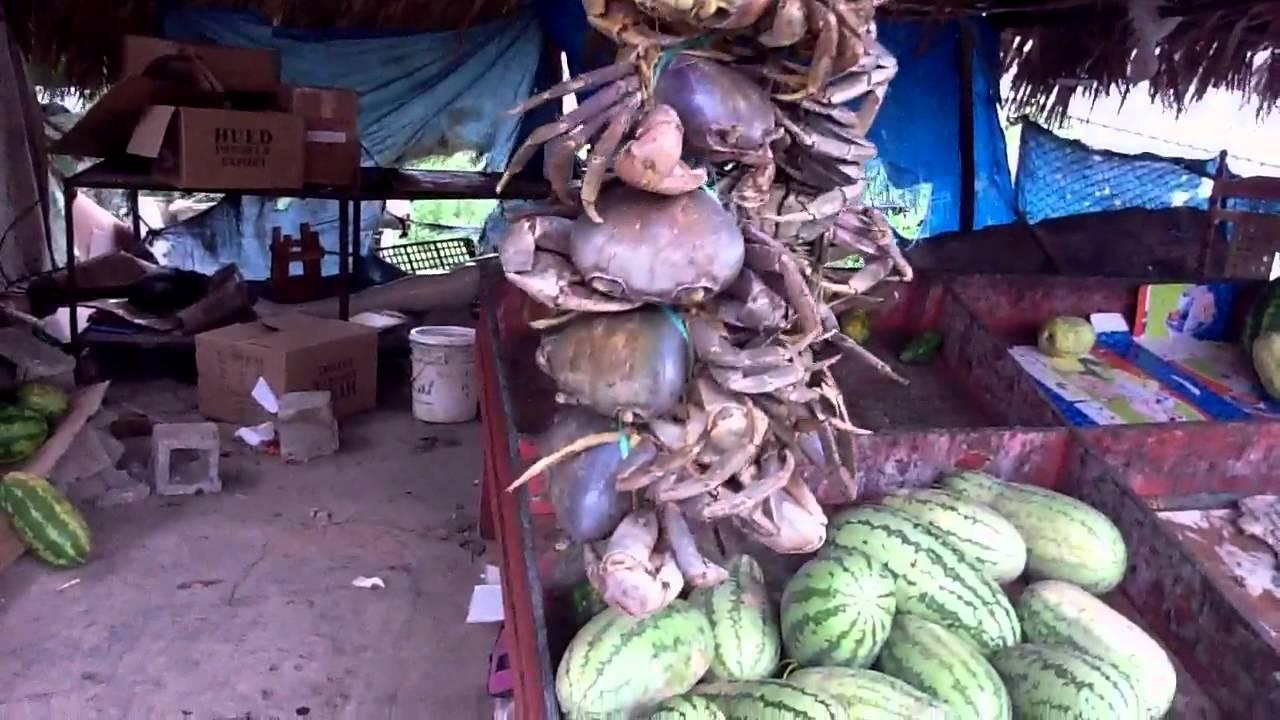 Blue Land Crab For Sale Land Crabs For Sale at Market