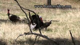 Hunting Turkey - Hunters Video