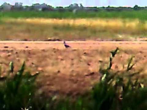 الصيد في العراق _ بندقية winchster 67_223gp Music Videos
