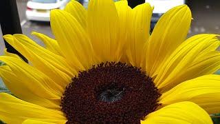 सुंदर फूल देने वाला पौधा जरूर लगायें Beautiful Flowering Plant