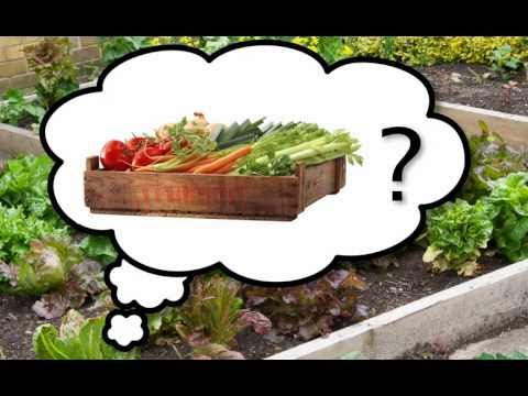The Best Vegetables to Grow in Your Garden - Choosing the Tastiest, Easy-to-Grow Plants