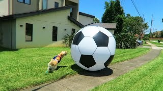 WORLD PUP 2018 (Giant 6 Foot Soccer Ball)