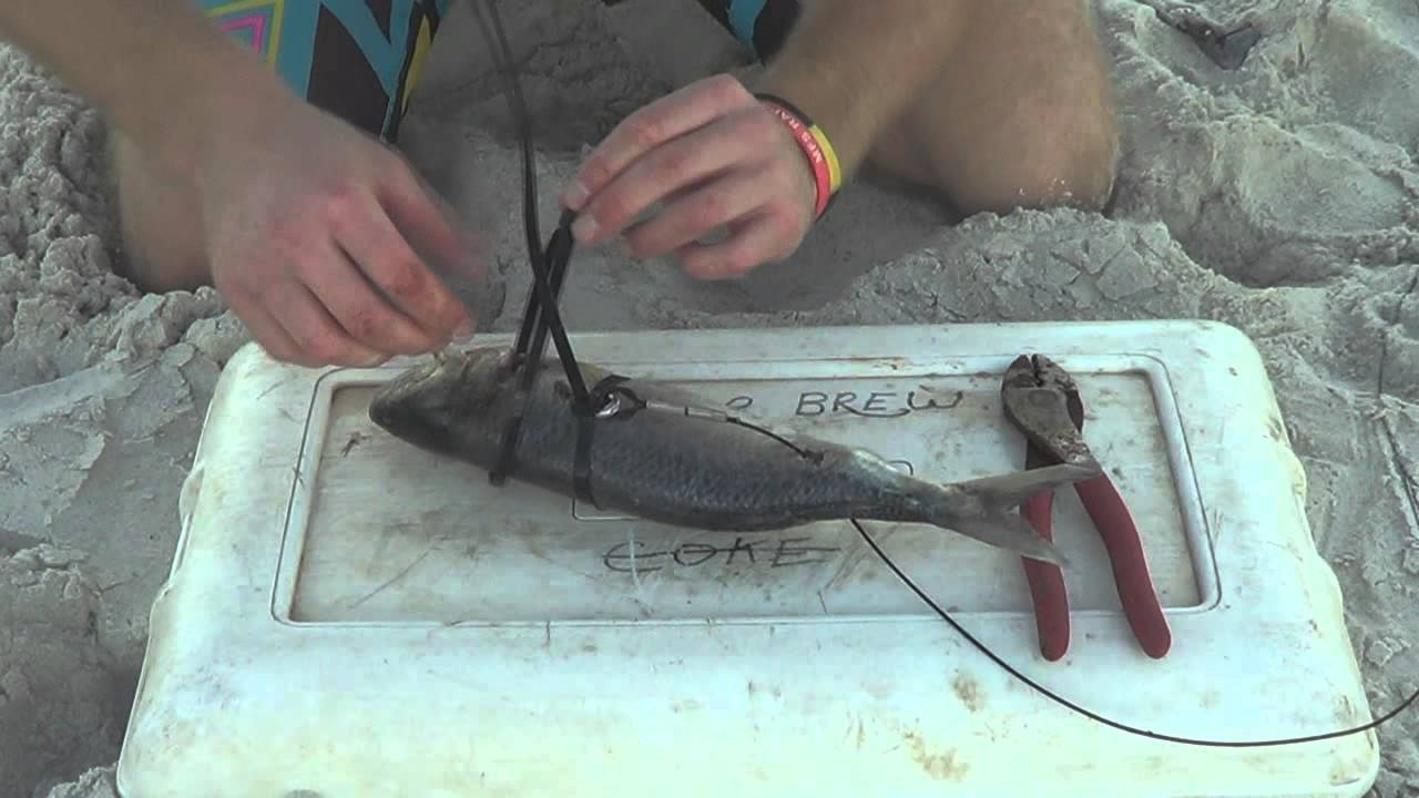 How to rig a shark bait youtube for How to make fish bait