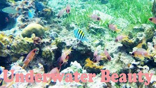 Snorkeling in Negril, Jamaica - Underwater Beauty