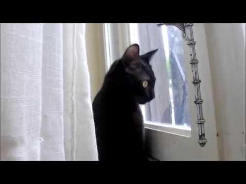 Chat qui miaule, miaule et miaule !!! / Cat meowing !!!