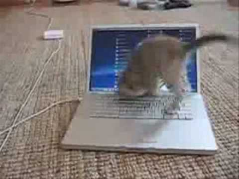 Kitten Loves MacBook Pro