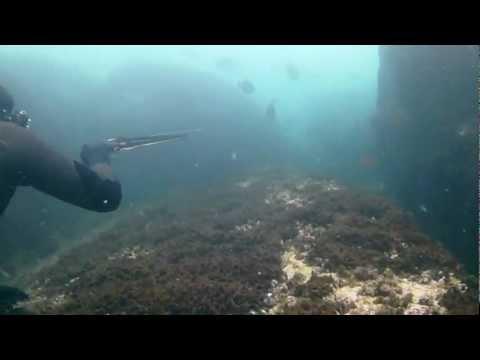 Sukelluskalastus saalistusta.  Vigo, Spain