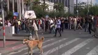 Riot dog Loukanikos in action during 2011 Athens protests - Truthloader