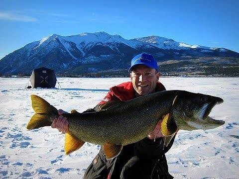 Huge Colorado Lakers!!! (C&R fish over 18