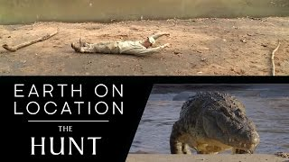 How Big Is A Croc? - The Hunt - #EarthOnLocation Vlog - BBC Earth Unplugged