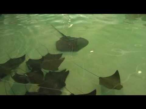 Behind the Scenes of TOUCH! Amazing Rays & Sharks