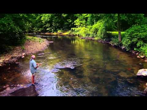 Go Fish, Georgia!  - Georgia Fishing