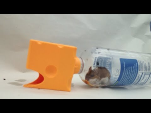 Plastic Bottle Mousetrap Test