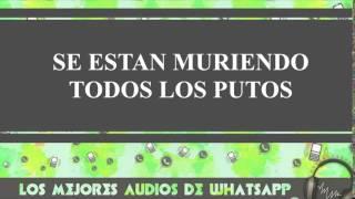 Se Estan Muriendo Todos Los Putos - Conversaciones De Whatsapp - Los Mejores Audios Y Videos Whatsap