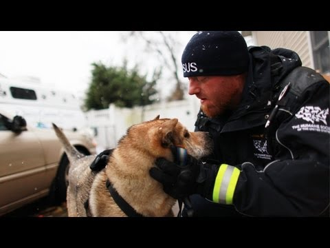 More than 30 staff and volunteers with The Humane Society of the United States are working to help pets impacted by Superstorm Sandy in New Jersey and New Yo...