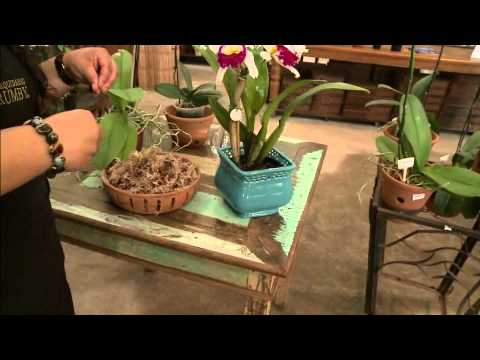 Aprenda como cultivar a sua própria orquídea!