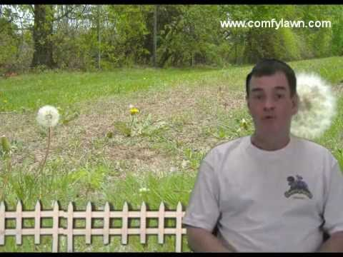 How to Get Rid of Lawn Weeds Organically