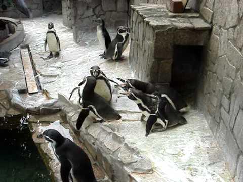 江戸川区自然動物園 フンボルトペンギン みんな怒ってます
