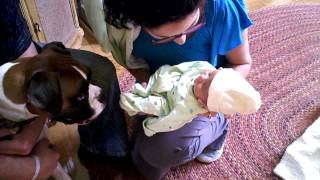 Brutas Meets BABY for the First time|| dogs and babies meeting for the first time Compilation