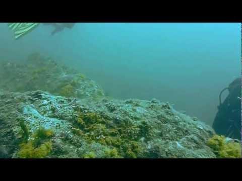 Buceo, submarinismo, La Calita, Almuñécar, Granada