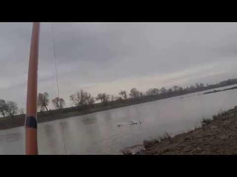 sacramento river sturgeon fishing march 2 2015 cnr