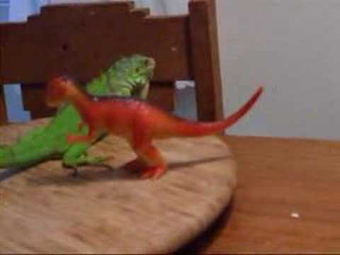 Pet Iguanas Video