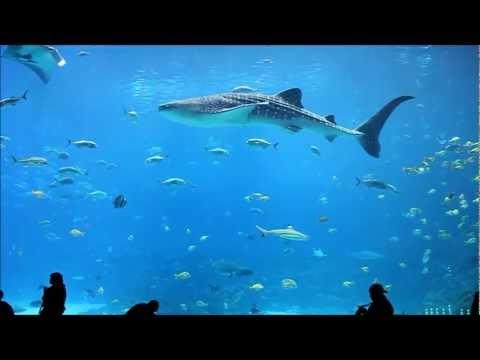 Georgia Aquarium Whale Sharks and Stunning Fish in 1080p HIGH DEF
