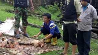 download lagu Fresh Kill For Dinner Sean Burch Expedition Nepal Cnn gratis